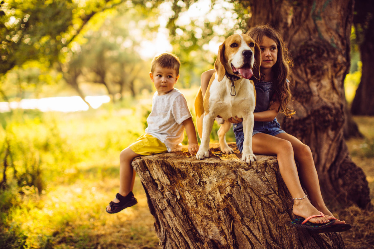 Derechos de los  animales que  debemos conocer  y respetar