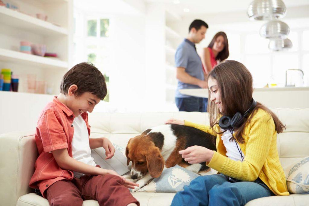 Mantén sano y feliz a tu perro con estos tres consejos de alimentación.