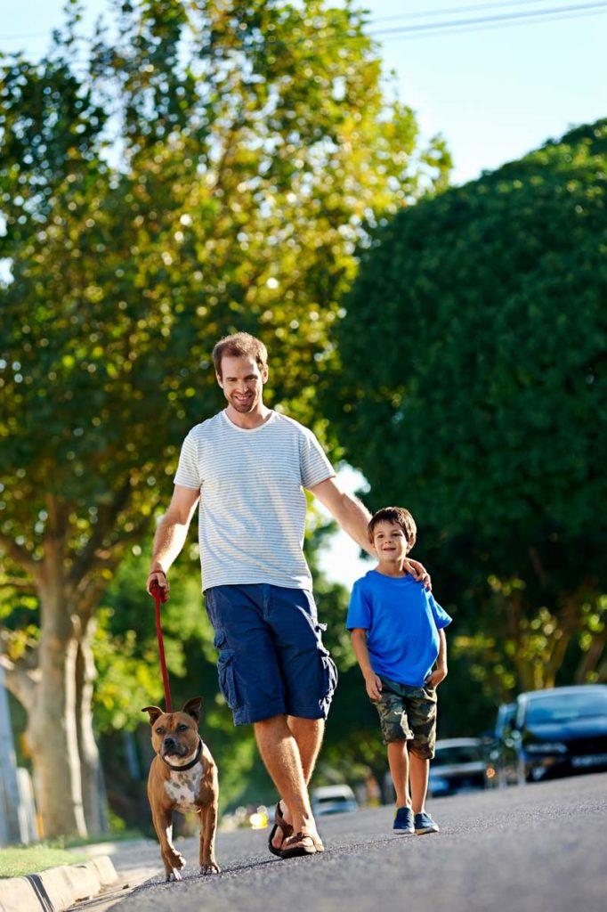 4 Reglas que todo vecino responsable dueño de perro debería seguir.