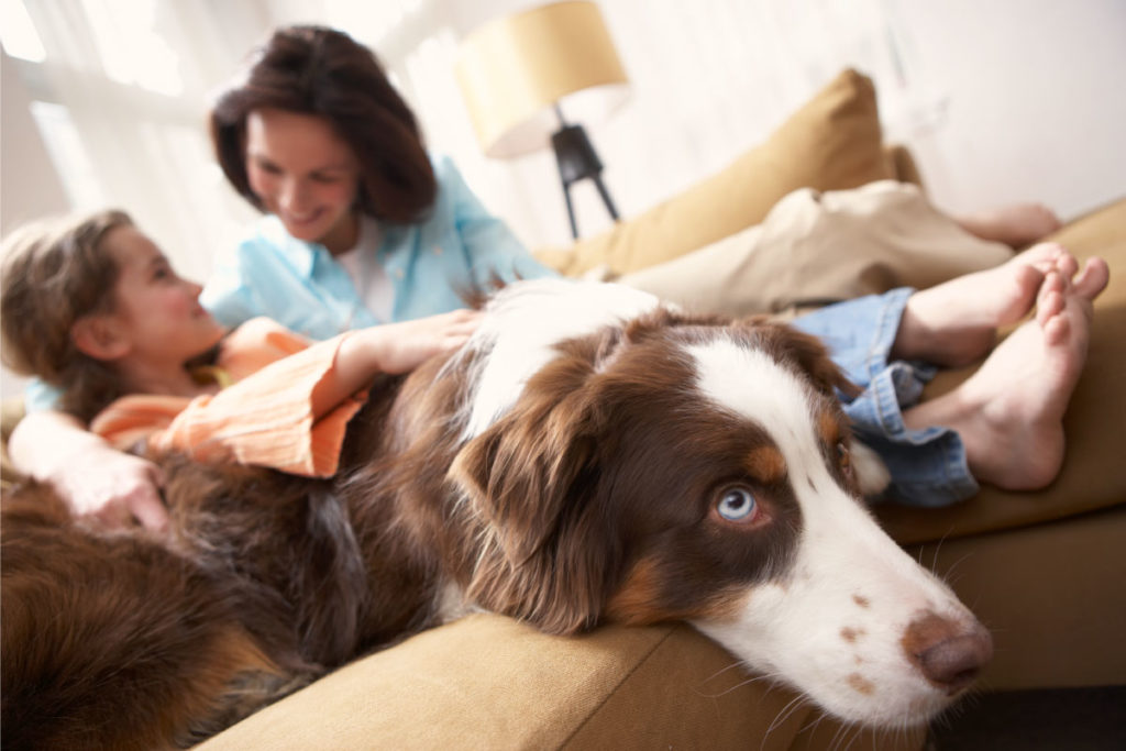 Prepara a tu perro para la nueva rutina de tu familia.