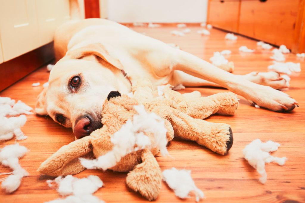 Evita que tu perro muerda y rompa tus cosas dentro de casa.