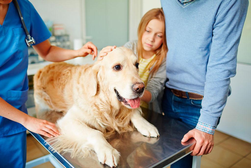 ¿Cómo saber que tu perro siente dolor?
